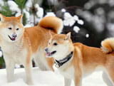 The text describes your favorite animal in English with translations: dogs and cats