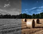 How to turn black and white photos into color photos online without software