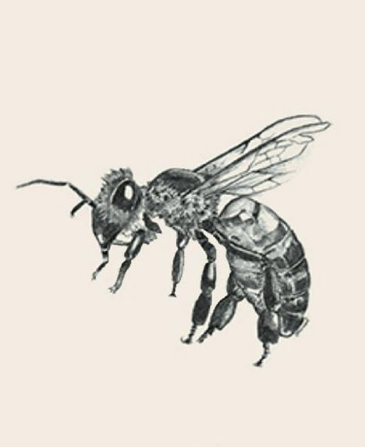 4d vat picture of the bee