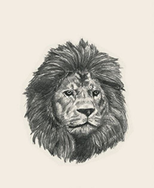 4d animal picture of the lion