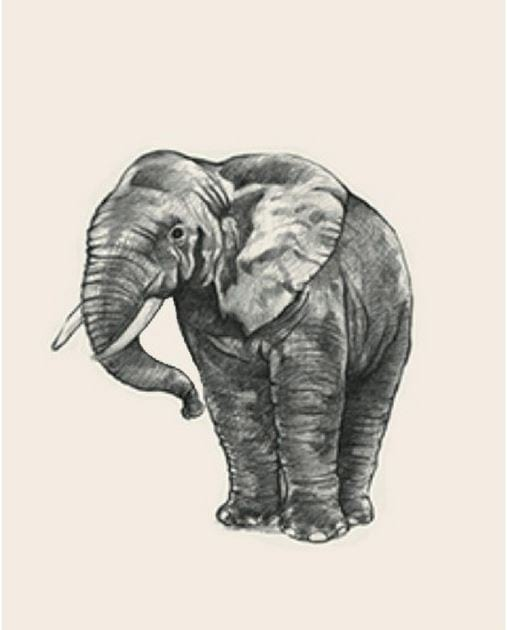 4d animal picture with the elephant