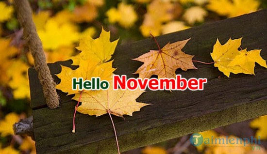 11 November pictures. 14