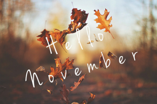 11 November pictures. 19