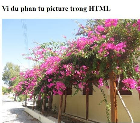 the img in html 29